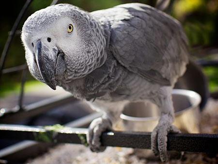 5 Reasons To Adopt A Pet Bird Pet Birds By Lafeber Co