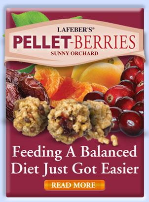 Pellet-Berries
