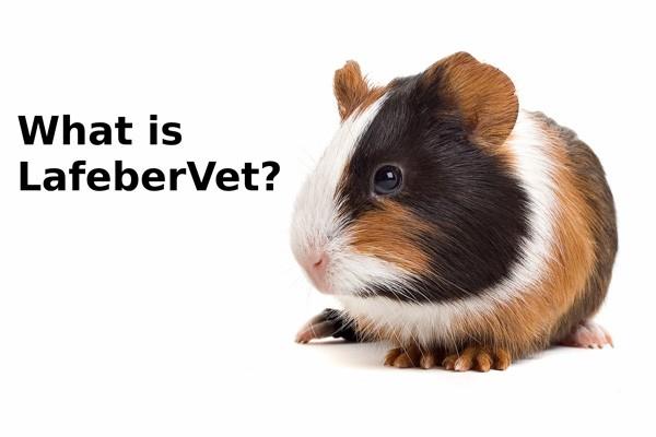 What is LafeberVet?