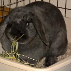 Coal bunny