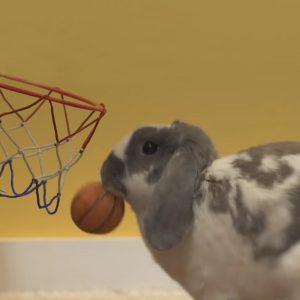 rabbit slam dunking basketball
