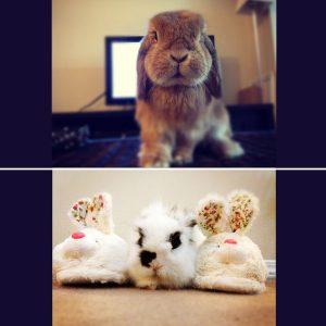 photos of two bunnies