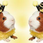 guinea pig dressed as bee
