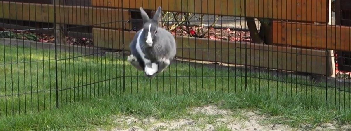rabbit in mid-jump