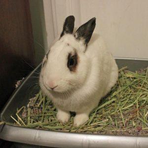 rabbit sitting in litter box