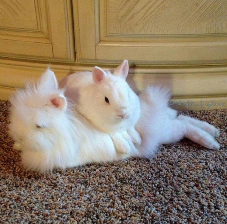 two bunnies cuddling on floor