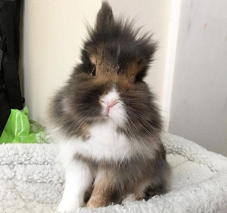 fluffy bunny sitting