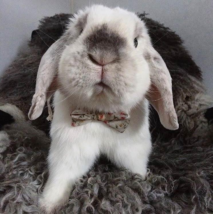rabbit wearing bow tie