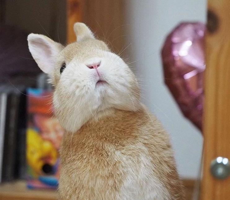 rabbit peering upward