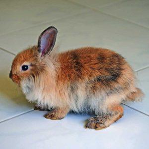 rabbit standing on tile floor