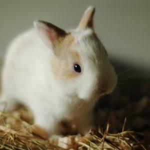 rabbit standing on hay