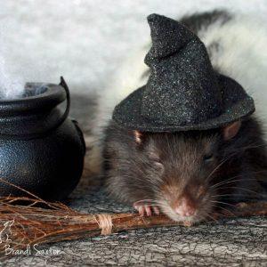 sleeping rat wearing witch hat beside cauldron