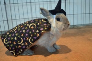 rabbit in witch costume