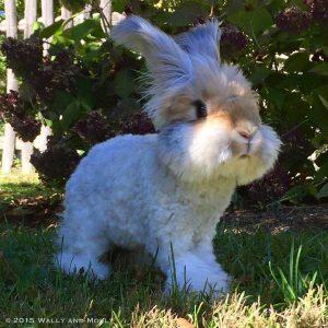 photos of Wally The Bunny