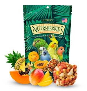 small bird food
