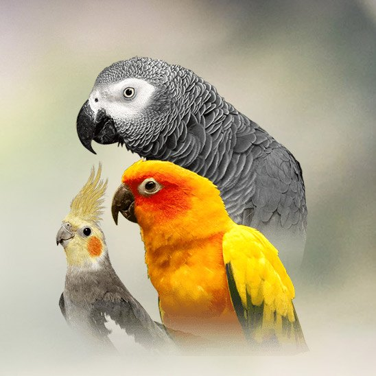 Parrot | Personality, Food & Care – Pet