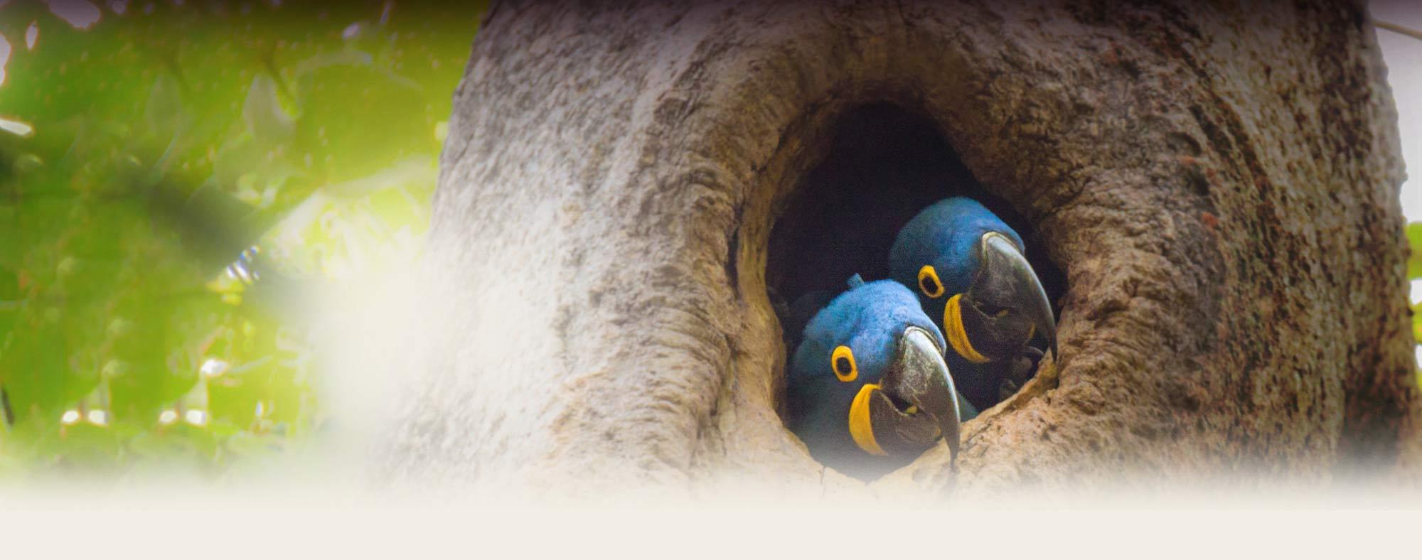Find a Bird Club – Pet Birds by Lafeber Co