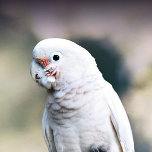 cockatoo large white parrot