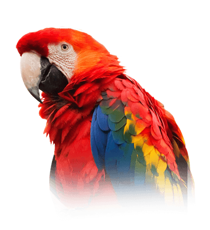 Scarlet Macaw Personality, Food & Care – Pet Birds by Lafeber Co
