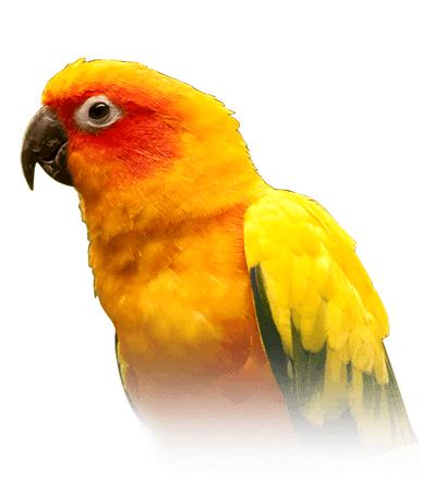 Conure Personality, Food & Care – Pet Birds by Lafeber Co