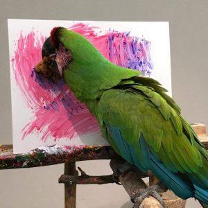 Posts – Pet Birds by Lafeber Co