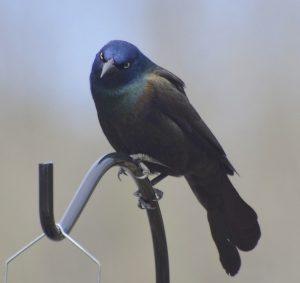 black wild bird