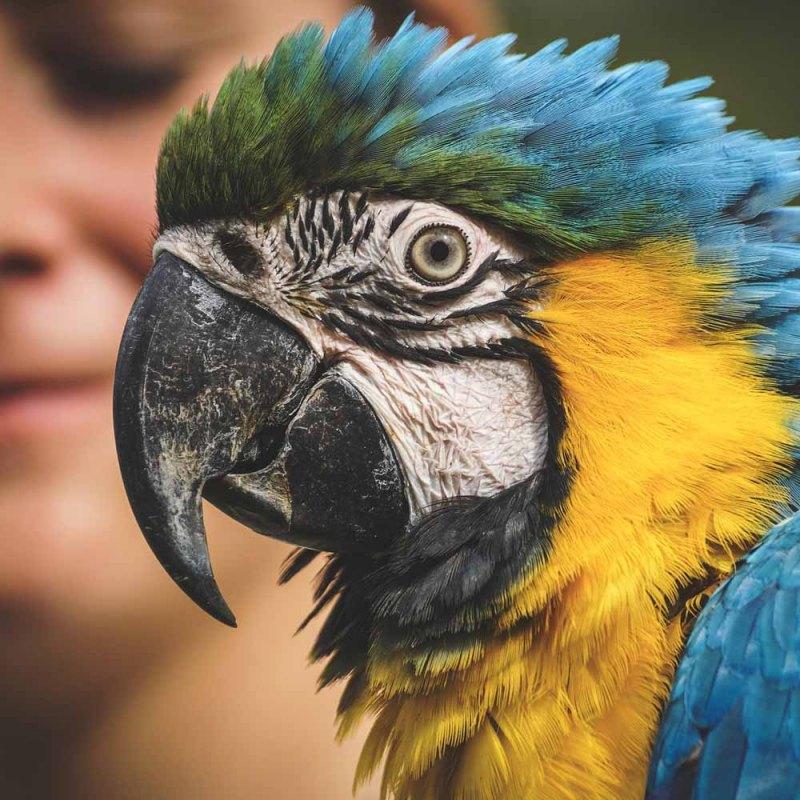 macaw head, side view