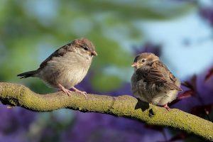 Cities Building Bird-Friendly Communities