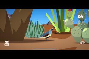 screenshot of a bird from the app Find My Birds