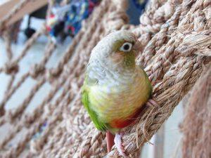 Bird on a hammock