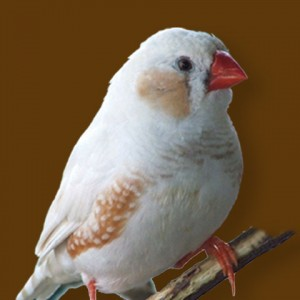 Food for Finches