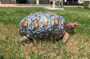 Freddy-The-Tortoise