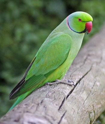 small birds do talk � pet birds by lafeber co