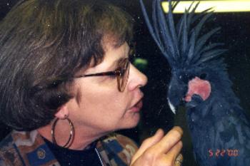 Liz with black Palm Cockatoo