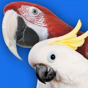 Macaw & Cockatoo food