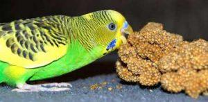 Pet Parrots & Ground Foraging – Pet Birds by Lafeber Co