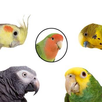 several parrot species