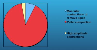 La plus grande partie du temps nécessaire à la formation de la pelote et la regurgitation est dévolu à la compaction des matériaux indigestible