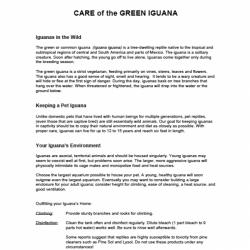green iguana handout