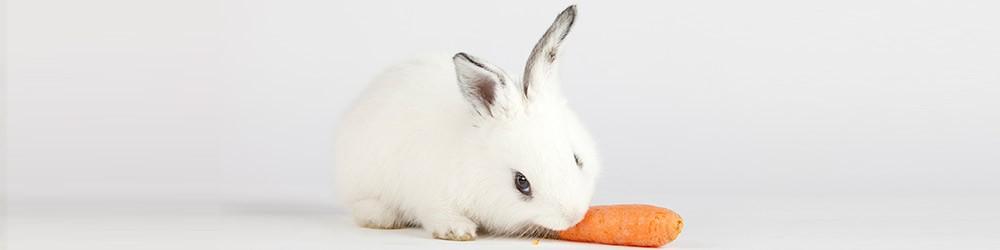 bunny w/carrot