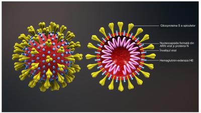 Coronavirus diagram