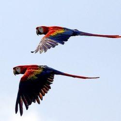 parrot flight syncronicity