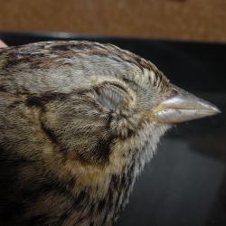Sick wild finch