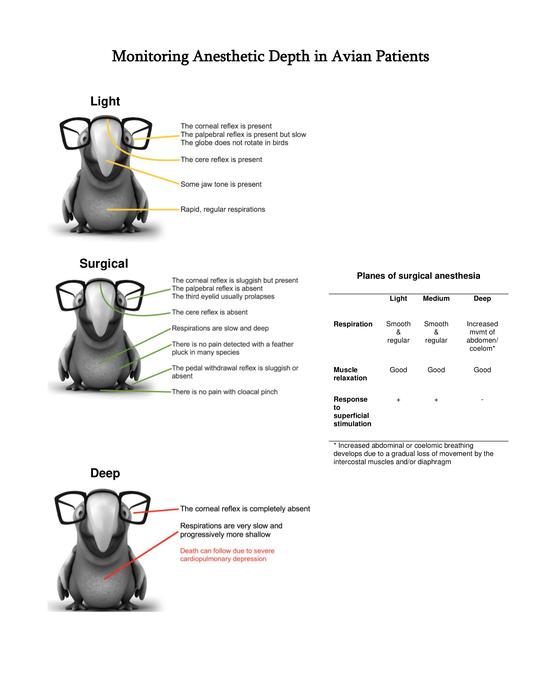 Monitoring-Anesthetic-Depth-in-Avian-Patients-Appendix-1