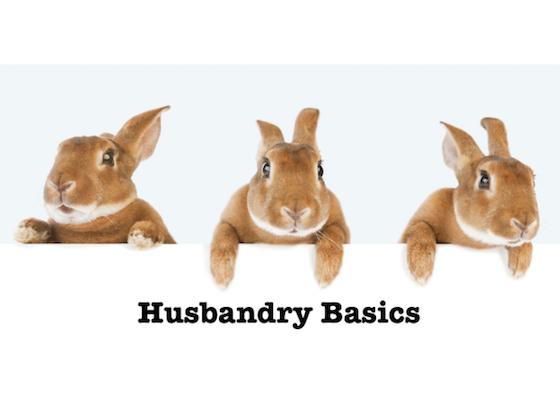Husbandry Basics banner