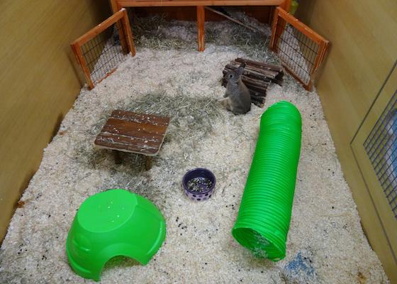 Indoor enclosure