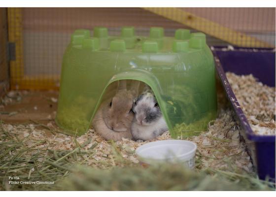 cage furniture Po