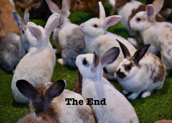 bunnies shankar s FCC