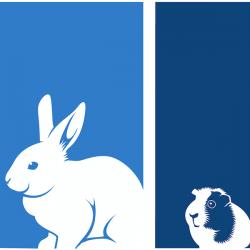 AEMV cropped square rabbit gpig