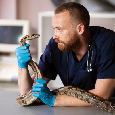 Vet holding snake cropped square